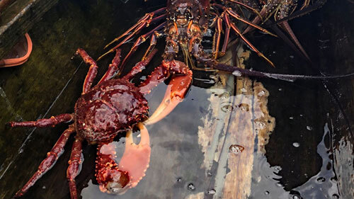 11Traditional Kuna delicacies on the San Blas Islands, Panama: fresh crab and langosta!